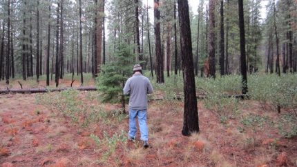 Hunting a Christmas Tree to Cut with the Chainmate Survival Saw